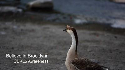 Believe in Brooklynn