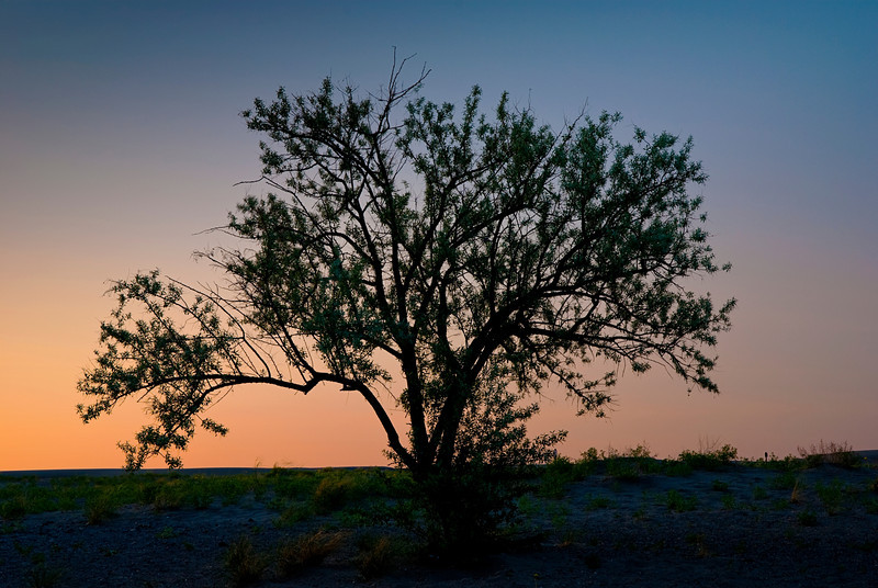 Beautiful tree silhouetted against a sunset sky