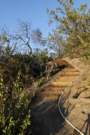 hillside path to the bee hives