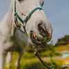 Carolynn's Horseys_004