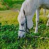 Carolynn's Horseys_002