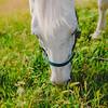 Carolynn's Horseys_013