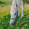 Carolynn's Horseys_005