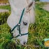 Carolynn's Horseys_006