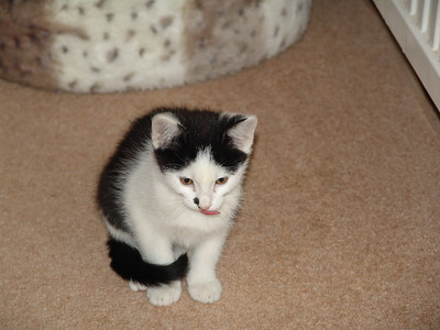 Jacob as a kitten