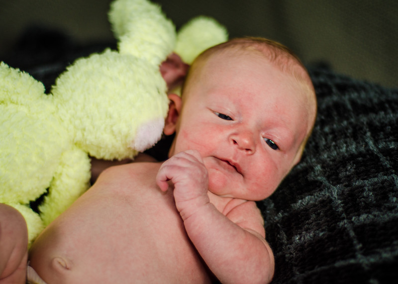 Photo of newborn with toy bunny