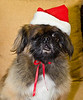 Holiday Pet Portraits-043