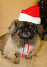 Holiday Pet Portraits-041