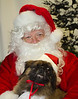 Holiday Pet Portraits-024