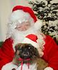Holiday Pet Portraits-033