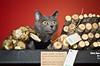 Holiday Pet Portraits-318