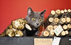 Holiday Pet Portraits-317