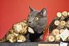 Holiday Pet Portraits-316