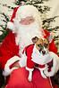 Holiday Pet Portraits-188
