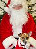 Holiday Pet Portraits-194