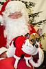 Holiday Pet Portraits-186