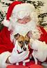 Holiday Pet Portraits-184
