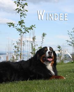 Windee 3795