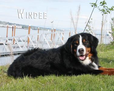 Windee 3792