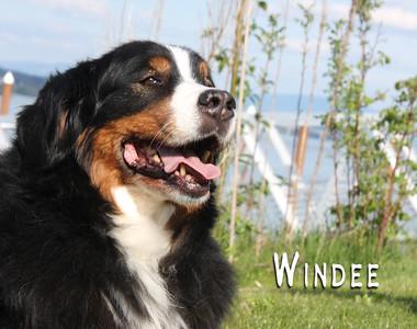 Windee 3800