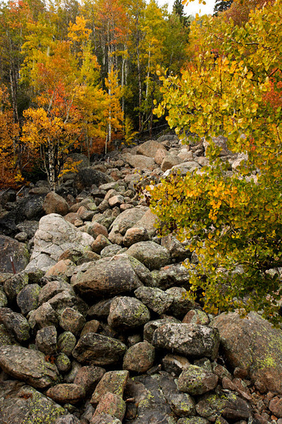 Rocks and aspens, Estes Park, Colorado.