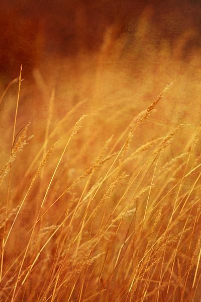 Prairie grass, Platte River State Park, Ne.