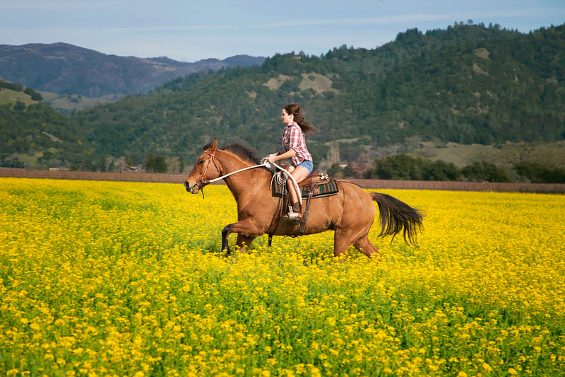 Woman on quarter horse riding in mustard flowers
