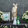 Dog_Show2014-13301