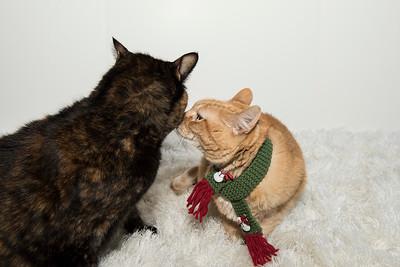 Ginger and Delilah 2_DSC4356