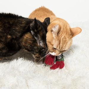 Ginger and Delilah 1 Lighter_DSC4354