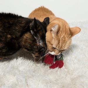 Ginger and Delilah 1_DSC4354
