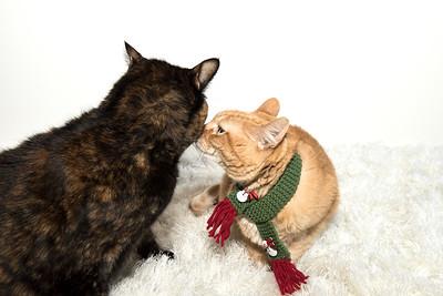 Ginger and Delilah 2 Lighter_DSC4356