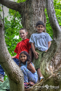 Three Monkeys in a Tree - Kethan, Nick and Vasantha at the Cottage in Prince Edward Island, July 29 2005