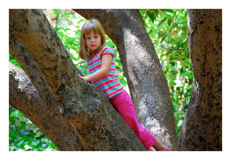 Lizzy tree