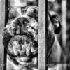 Bulldog_2O7A0984_v2