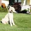 Portrait_Leathers_2009_9S7O1053