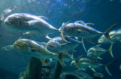EI_Friday_0127_NC Aquarium_
