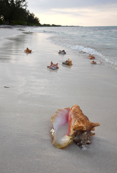 Conch shell's at the conch shack