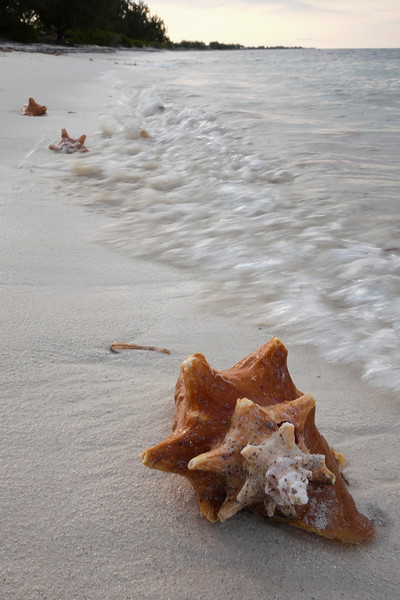 Conch shell's near the conch shack