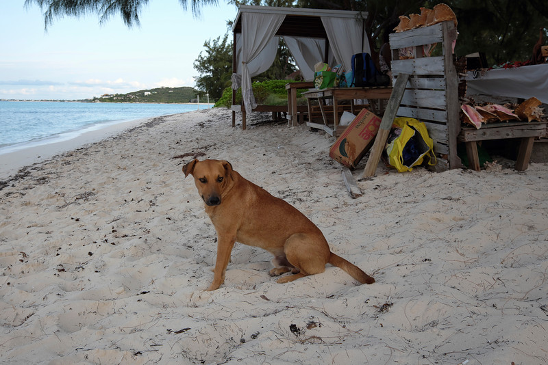Stray dog at the conch shack