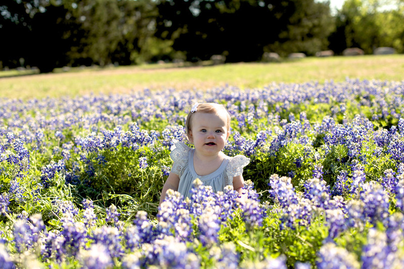 Bluebonnets Portraits