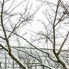 031317_snow_016