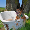 Greta .... relaxing in the RedNeck HotTub<br /> NO>>>THIS IS NOT PHOTOSHOPED !!