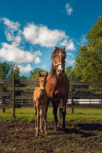 KAP_HorsesNoon-40-2