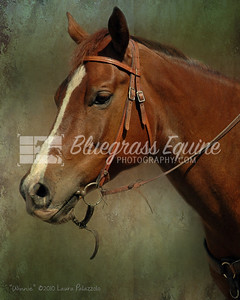 """Winnie"" - Portrait of a Quarter Horse. Painterly Effect & Retouching by Laura Palazzolo. Photo by Wendy Yang"