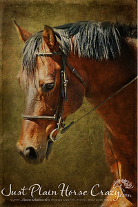 Portrait of a Quarter Horse - Tyson.