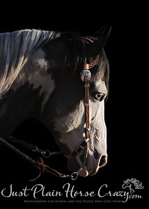 Portrait of Max Paint Stallion