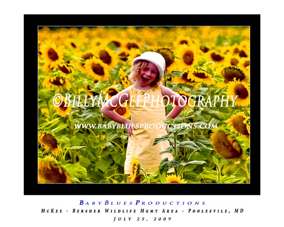 Field-of-Flowers - Sunflower 01