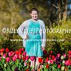 Sherwood Garden Tulips - Baltimore City Maryland