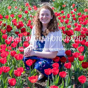 Tulips at Sherwood Gardens - 16 Apr 2017